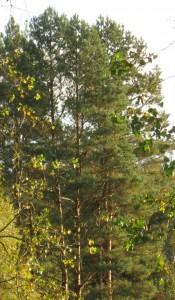 Otoczenie lasu SAK Hotel Olsztyn Noclegi ekologicznie