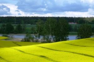 Krajobraz Warmińsko-Mazurski Kwitnący