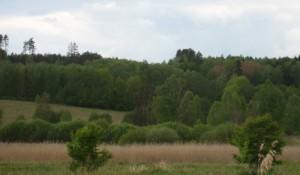 Lasy Okolice Olsztyna